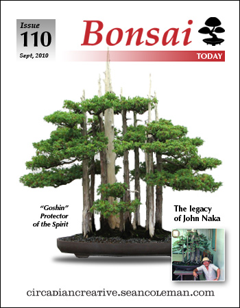 brand rebrand - bonsai today cover redo.