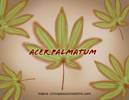 creation 18 acer palmatum