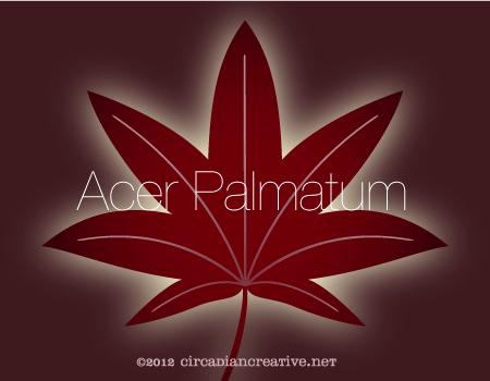 creation 21 acer palmatum 2