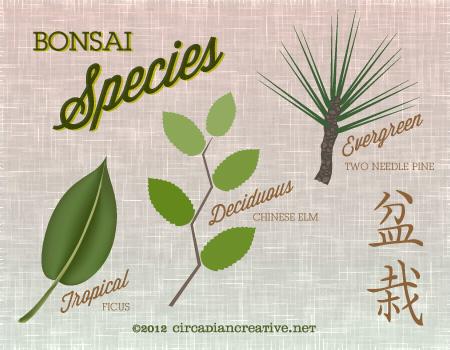 creation 150 bonsai 11