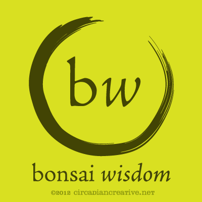 creation 177 bonsai wisdom