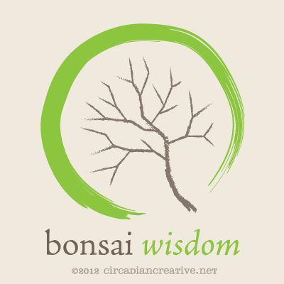 creation 178 bonsai wisdom