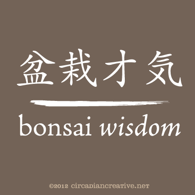 creation 204 bonsai wisdom 7